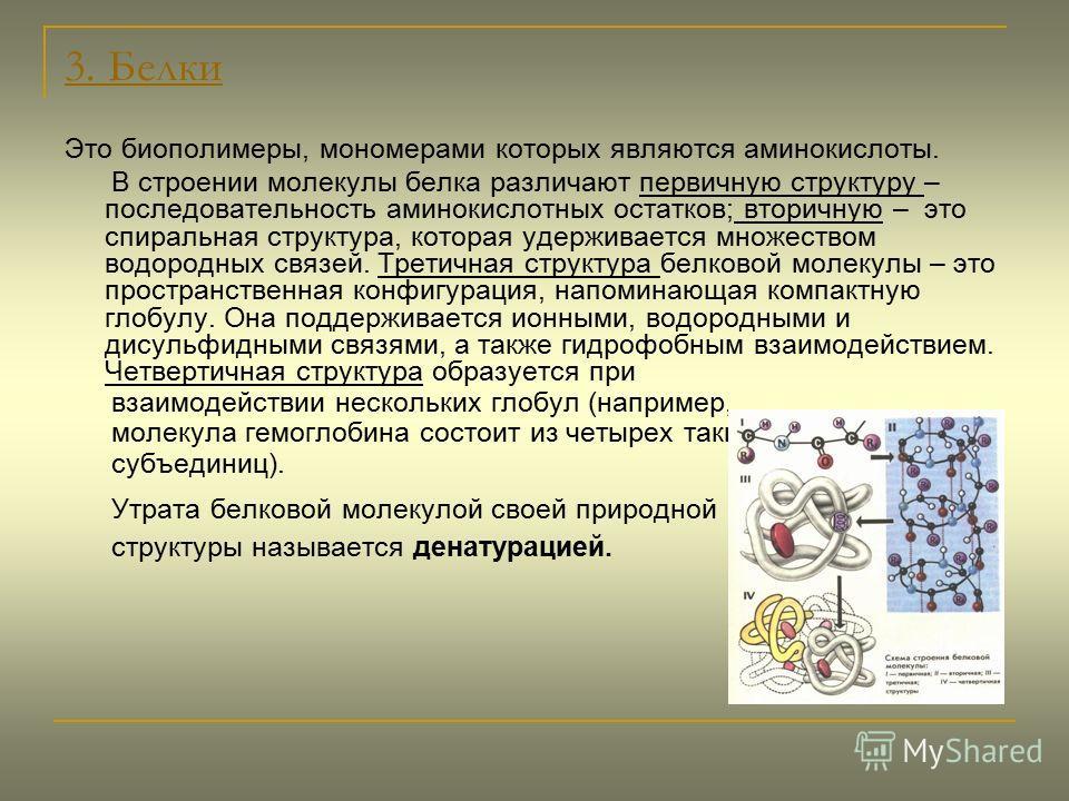 3. Белки Это биополимеры, мономерами которых являются аминокислоты. В строении молекулы белка различают первичную структуру – последовательность аминокислотных остатков; вторичную – это спиральная структура, которая удерживается множеством водородных