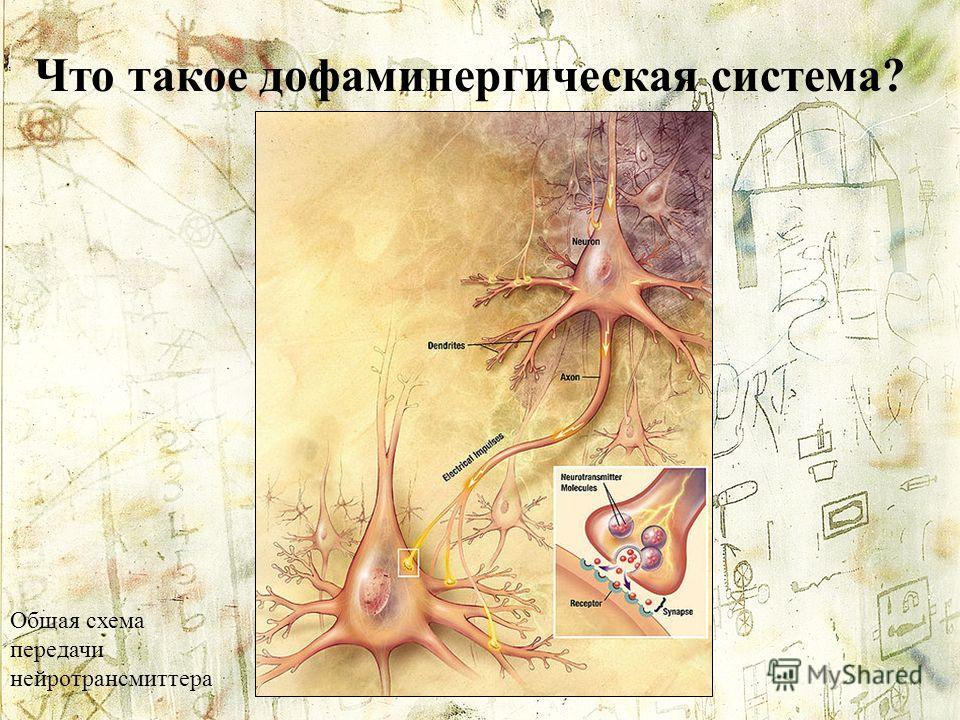 Что такое дофаминергическая система? Общая схема передачи нейротрансмиттера