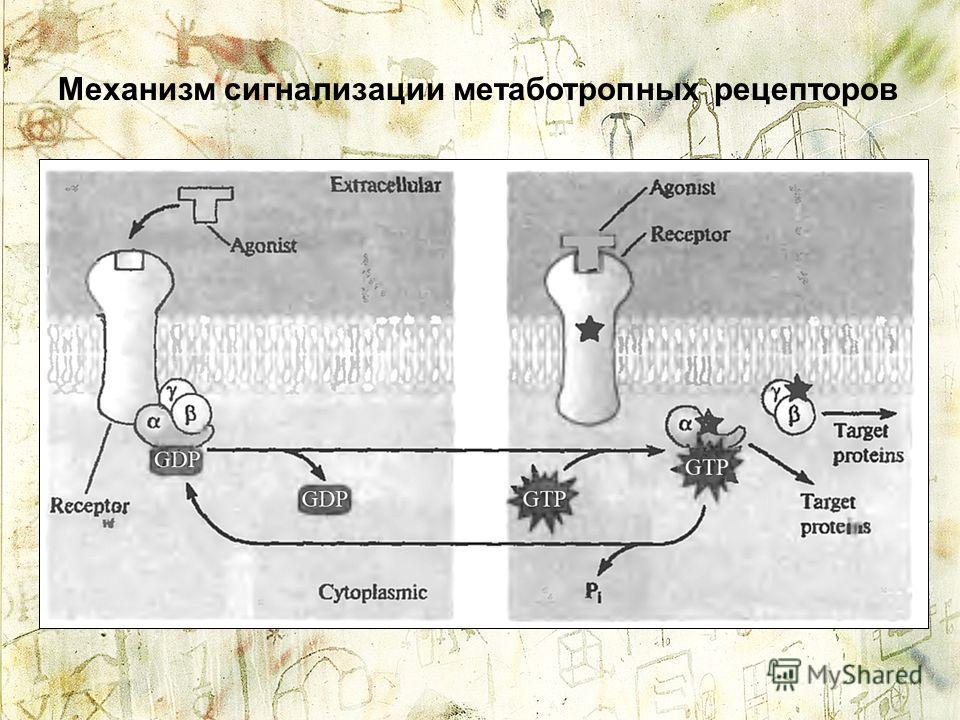 Механизм сигнализации метаботропных рецепторов