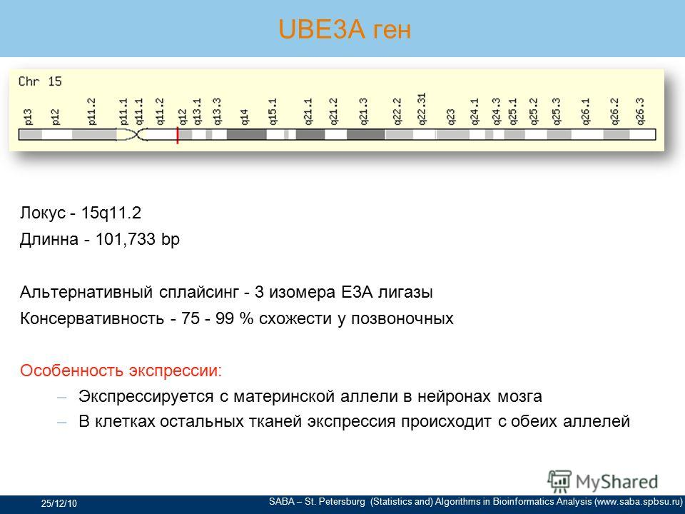 SABA – St. Petersburg (Statistics and) Algorithms in Bioinformatics Analysis (www.saba.spbsu.ru) UBE3A ген Локус - 15q11.2 Длинна - 101,733 bp Альтернативный сплайсинг - 3 изомера E3A лигазы Консервативность - 75 - 99 % схожести у позвоночных Особенн