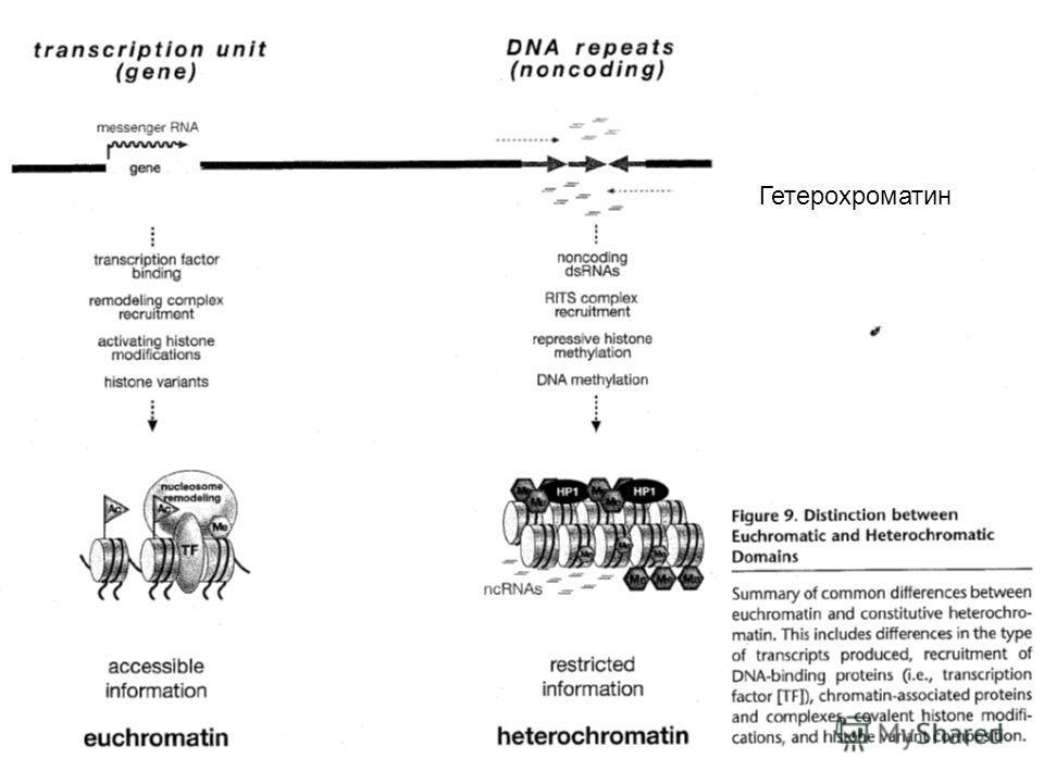 Гетерохроматин
