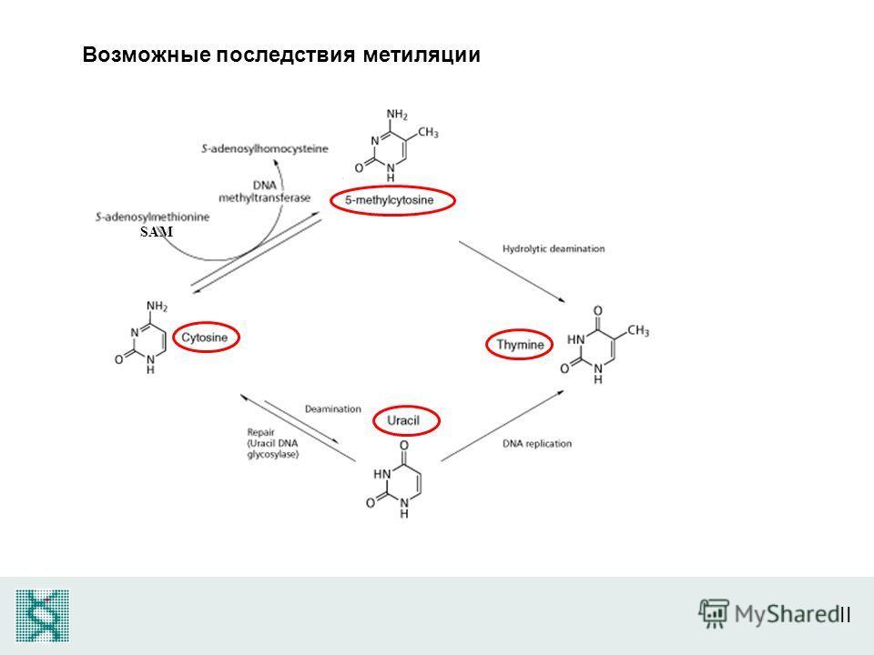 II SAM Возможные последствия метиляции