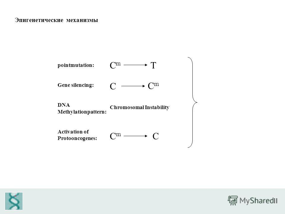 II pointmutation: Gene silencing: DNA Methylationpattern: Activation of Protooncogenes: CmCm T C CmCm Chromosomal Instability CmCm C Эпигенетические механизмы