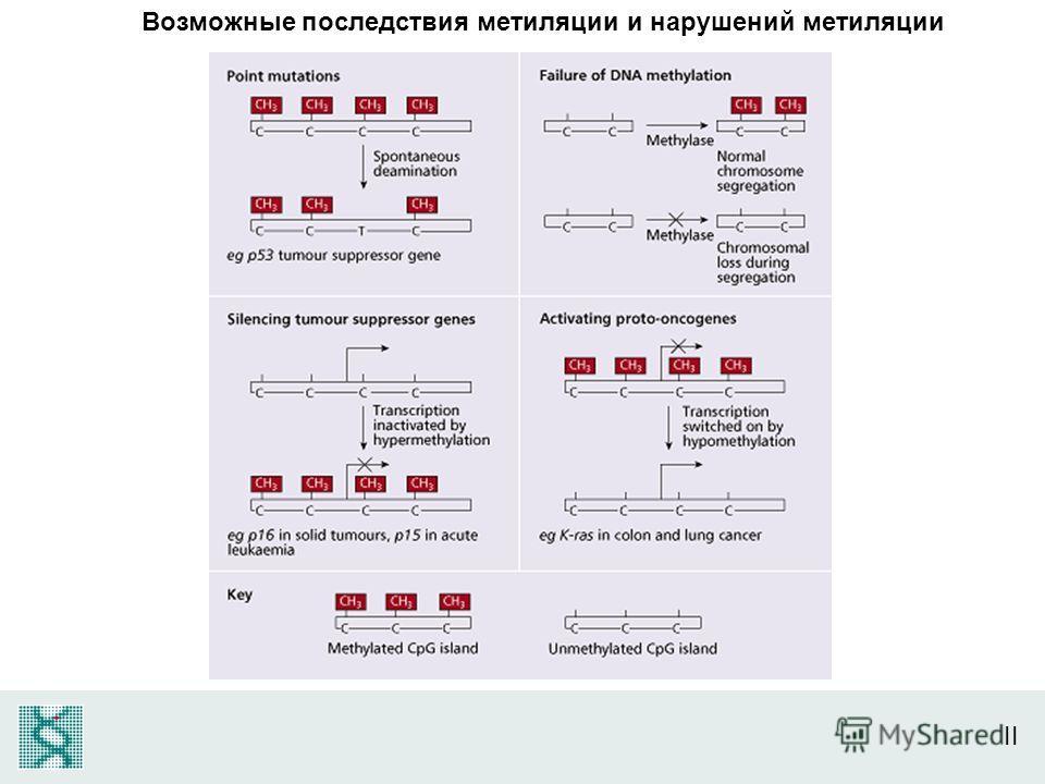 II Возможные последствия метиляции и нарушений метиляции