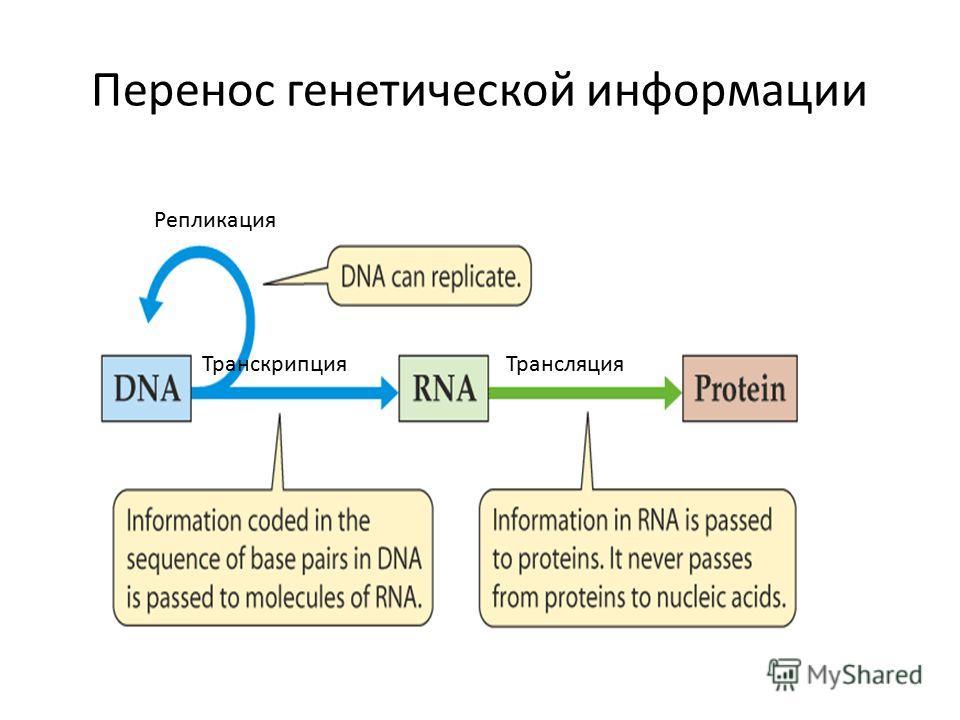 Перенос генетической информации ТрансляцияТранскрипция Репликация