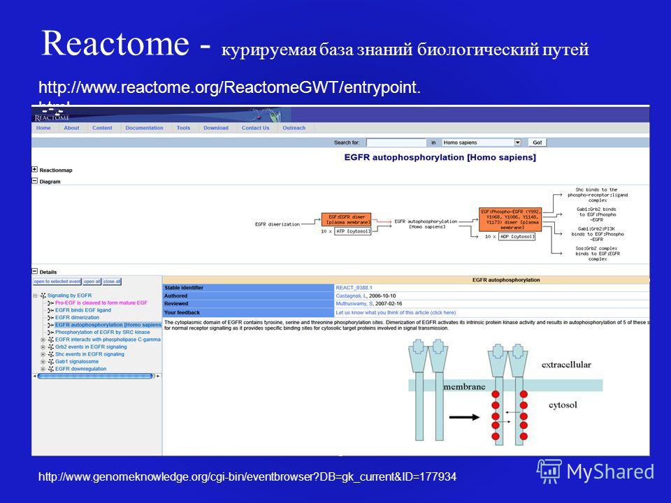 Reactome - курируемая база знаний биологический путей http://www.reactome.org/ReactomeGWT/entrypoint. html http://www.genomeknowledge.org/cgi-bin/eventbrowser?DB=gk_current&ID=177934
