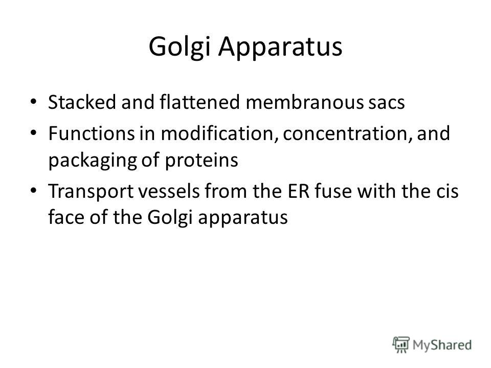 Golgi Apparatus Stacked and flattened membranous sacs Functions in modification, concentration, and packaging of proteins Transport vessels from the ER fuse with the cis face of the Golgi apparatus