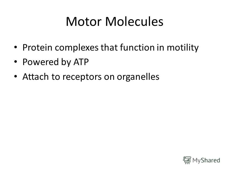 Motor Molecules Protein complexes that function in motility Powered by ATP Attach to receptors on organelles