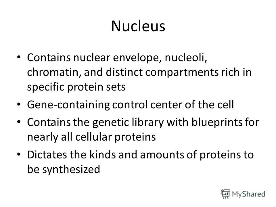 Nucleus Contains nuclear envelope, nucleoli, chromatin, and distinct compartments rich in specific protein sets Gene-containing control center of the cell Contains the genetic library with blueprints for nearly all cellular proteins Dictates the kind