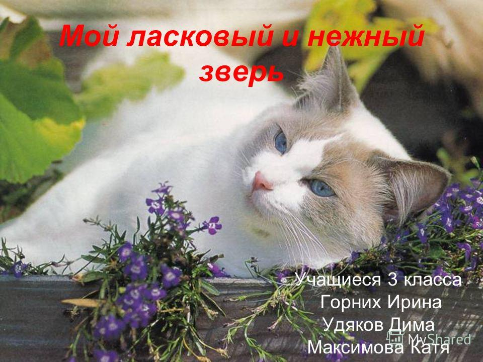 Мой ласковый и нежный зверь Учащиеся 3 класса Горних Ирина Удяков Дима Максимова Катя