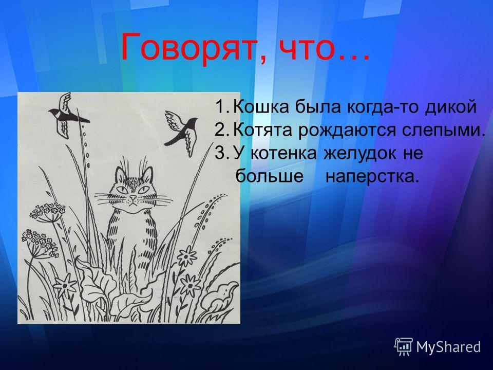 Говорят, что… 1.Кошка была когда-то дикой 2.Котята рождаются слепыми. 3.У котенка желудок не больше наперстка.