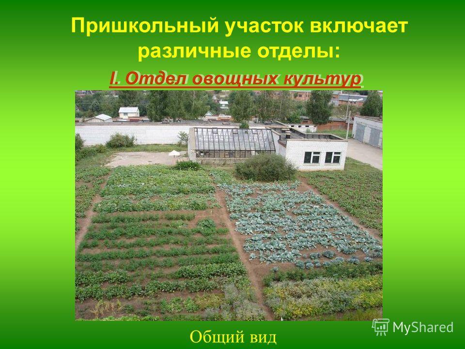 I. Отдел овощных культур Пришкольный участок включает различные отделы: Общий вид