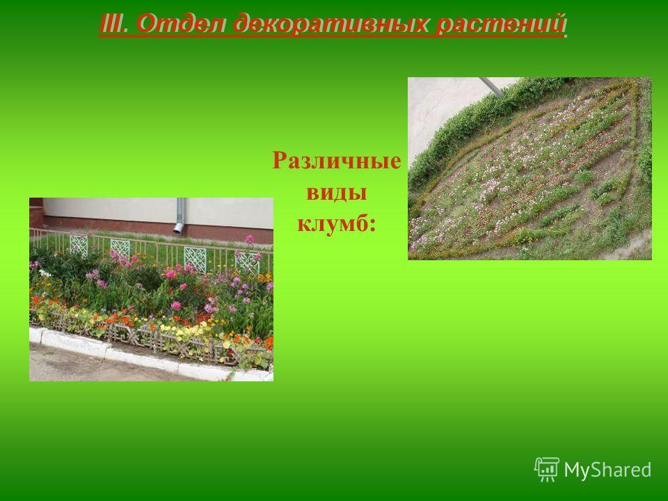 III. Отдел декоративных растений Различные виды клумб: