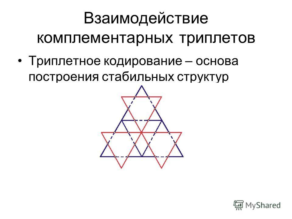 Взаимодействие комплементарных триплетов Триплетное кодирование – основа построения стабильных структур