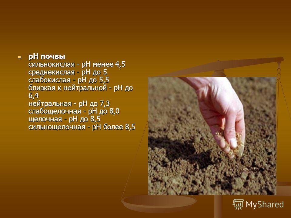 pH почвы сильнокислая - pH менее 4,5 среднекислая - pH до 5 слабокислая - pH до 5,5 близкая к нейтральной - pH до 6,4 нейтральная - pH до 7,3 слабощелочная - pH до 8,0 щелочная - pH до 8,5 сильнощелочная - pH более 8,5 pH почвы сильнокислая - pH мене