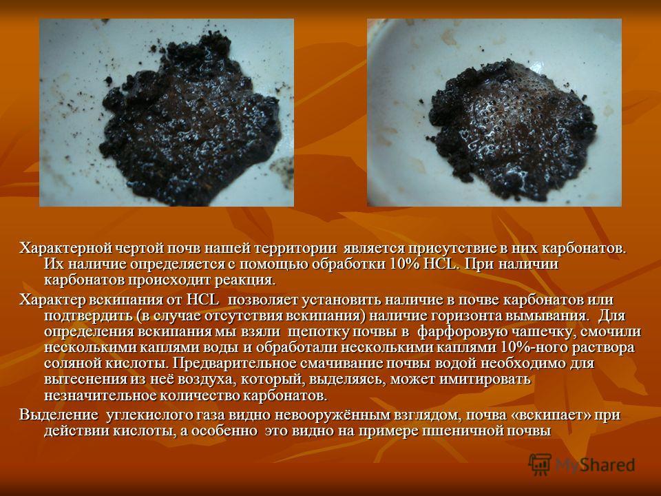 Характерной чертой почв нашей территории является присутствие в них карбонатов. Их наличие определяется с помощью обработки 10% HCL. При наличии карбонатов происходит реакция. Характер вскипания от HCL позволяет установить наличие в почве карбонатов