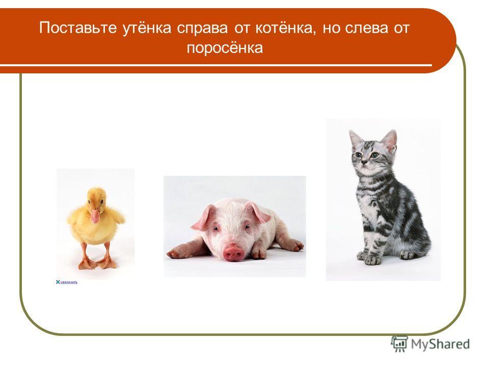 Поставьте утёнка справа от котёнка, но слева от поросёнка