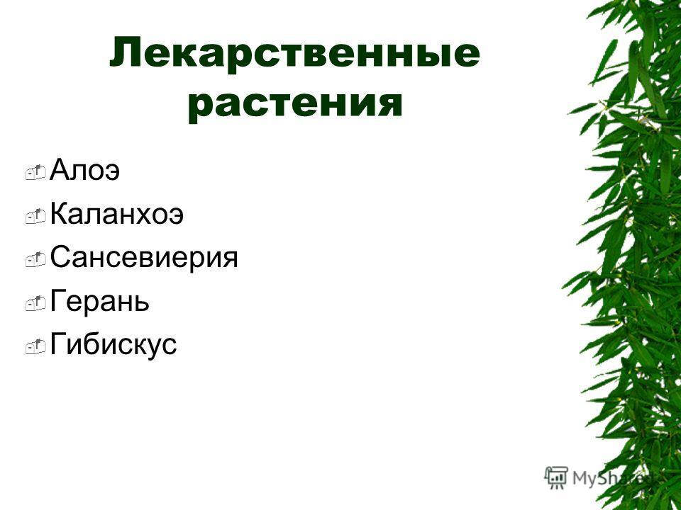 Лекарственные растения Алоэ Каланхоэ Сансевиерия Герань Гибискус
