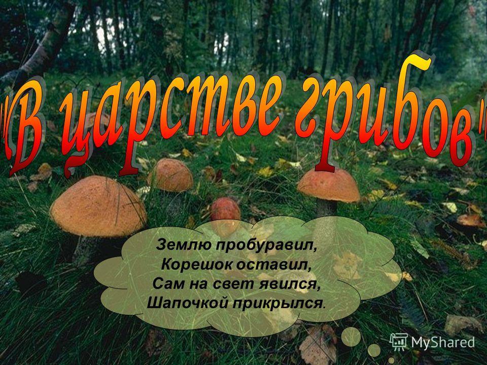 Землю пробуравил, Корешок оставил, Сам на свет явился, Шапочкой прикрылся.
