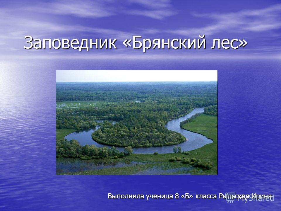 Заповедник «Брянский лес» Выполнила ученица 8 «Б» класса Рыльская Ирина