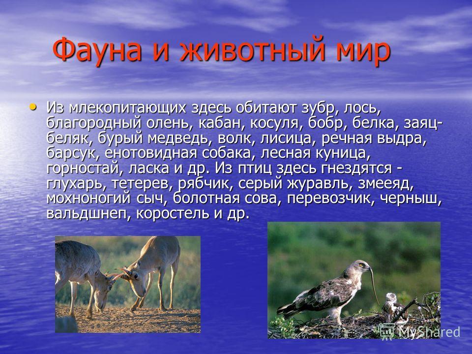 Фауна и животный мир Из млекопитающих здесь обитают зубр, лось, благородный олень, кабан, косуля, бобр, белка, заяц- беляк, бурый медведь, волк, лисица, речная выдра, барсук, енотовидная собака, лесная куница, горностай, ласка и др. Из птиц здесь гне
