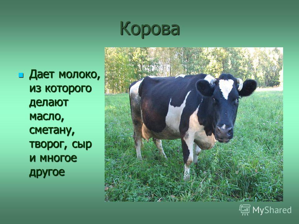 Корова Дает молоко, из которого делают масло, сметану, творог, сыр и многое другое Дает молоко, из которого делают масло, сметану, творог, сыр и многое другое