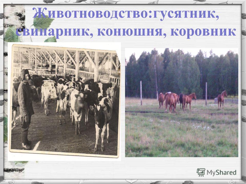 Животноводство:гусятник, свинарник, конюшня, коровник