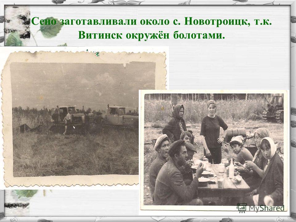 Сено заготавливали около с. Новотроицк, т.к. Витинск окружён болотами.