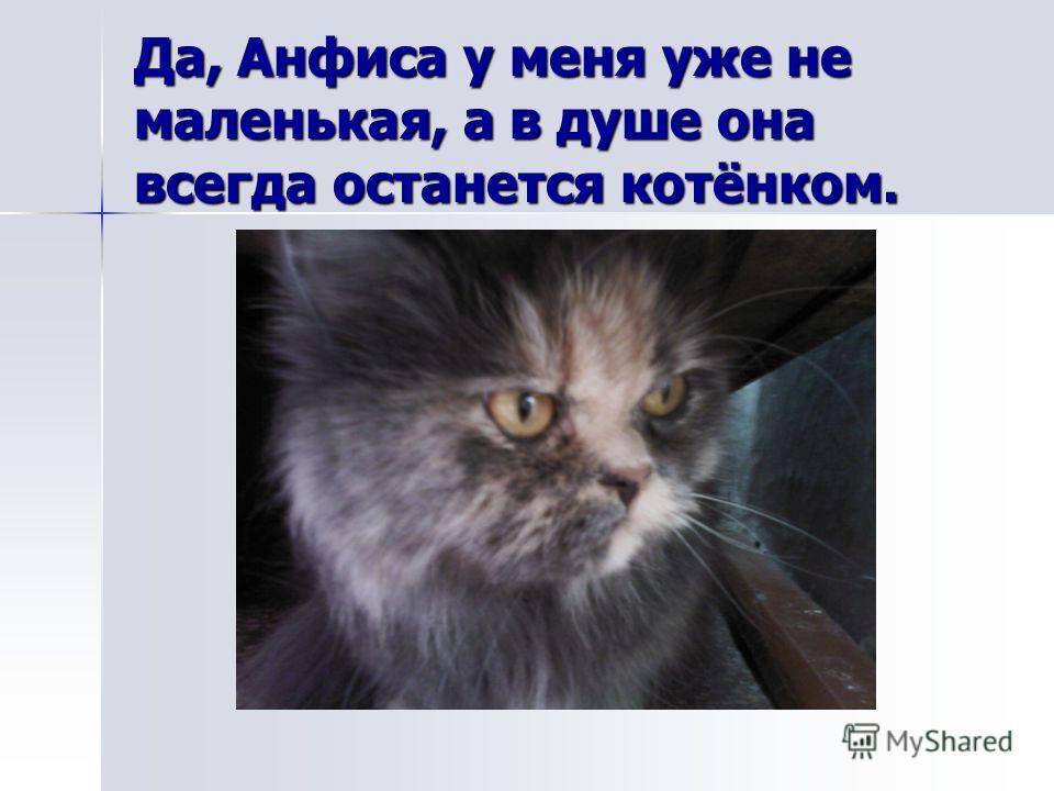 Да, Анфиса у меня уже не маленькая, а в душе она всегда останется котёнком.