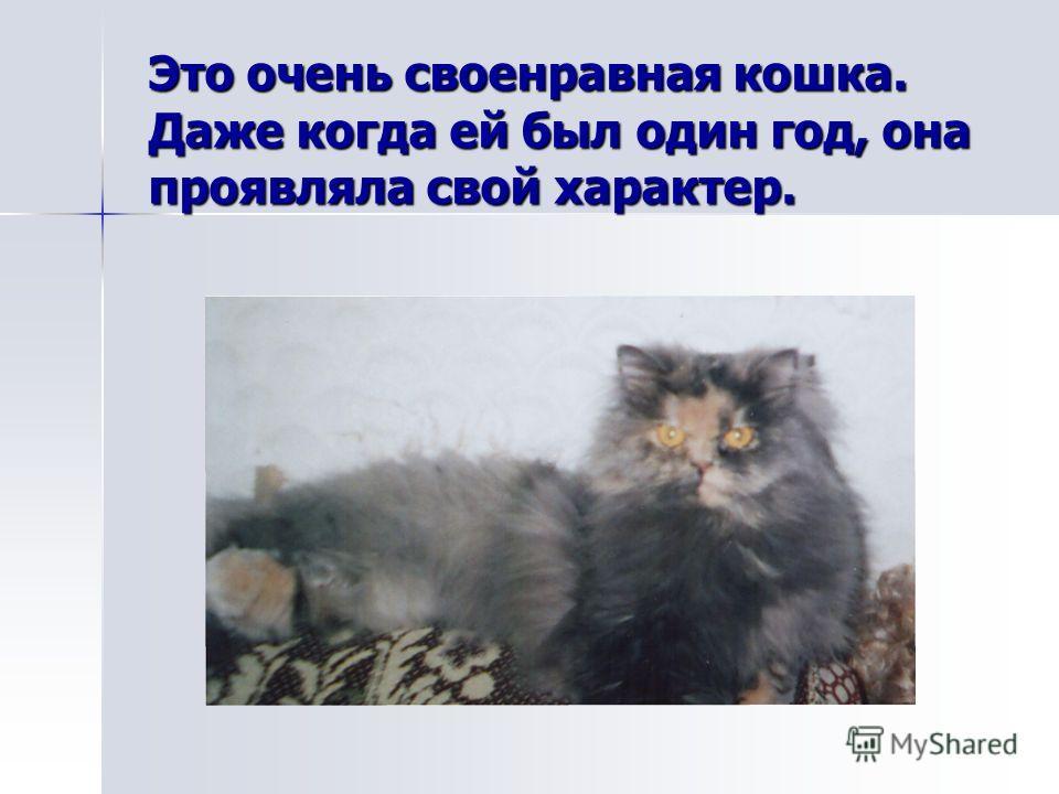 Это очень своенравная кошка. Даже когда ей был один год, она проявляла свой характер.