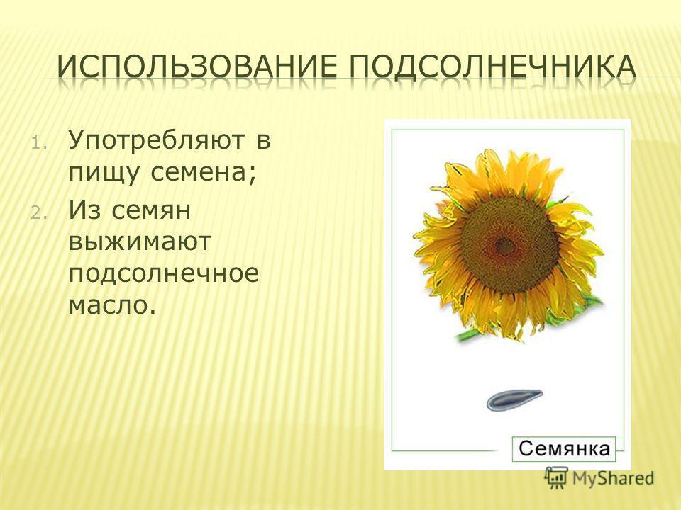 1. Употребляют в пищу семена; 2. Из семян выжимают подсолнечное масло.