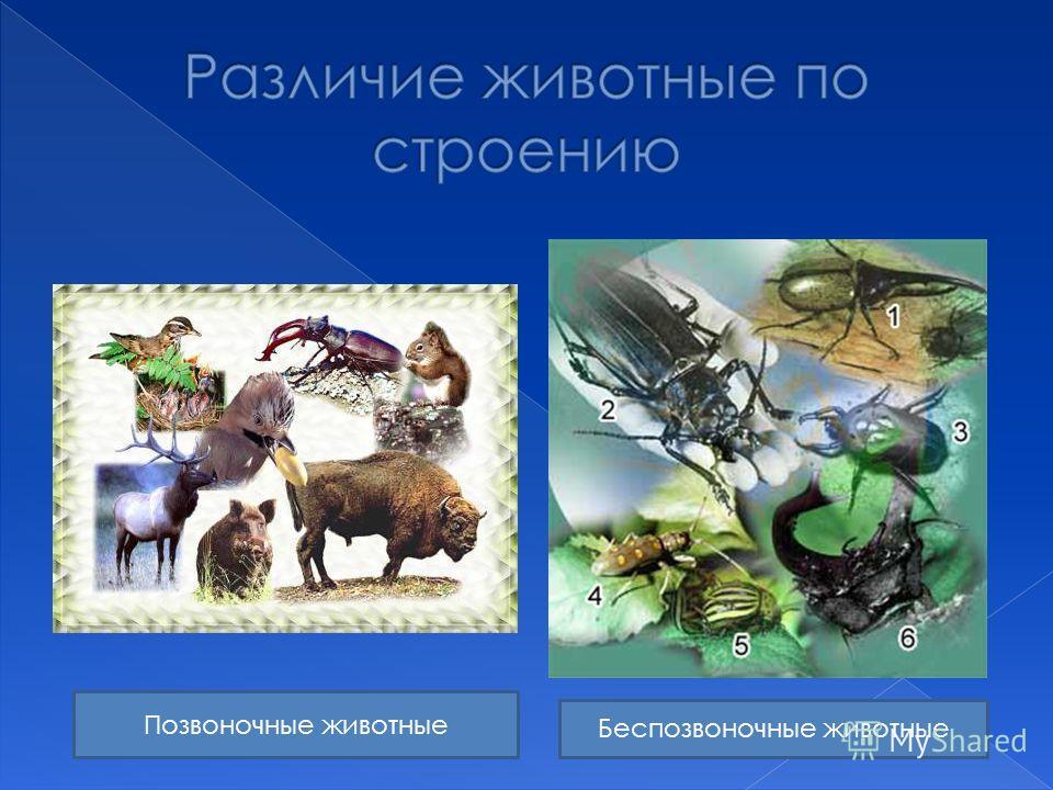 Позвоночные животные Беспозвоночные животные