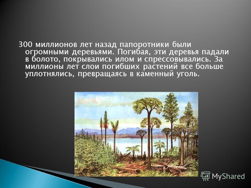 300 миллионов лет назад папоротники были огромными деревьями. Погибая, эти деревья падали в болото, покрывались илом и спрессовывались. За миллионы лет слои погибших растений все больше уплотнялись, превращаясь в каменный уголь.