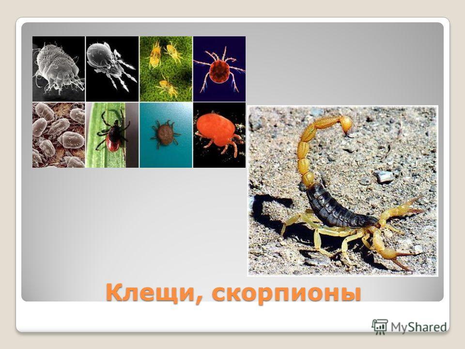 Клещи, скорпионы