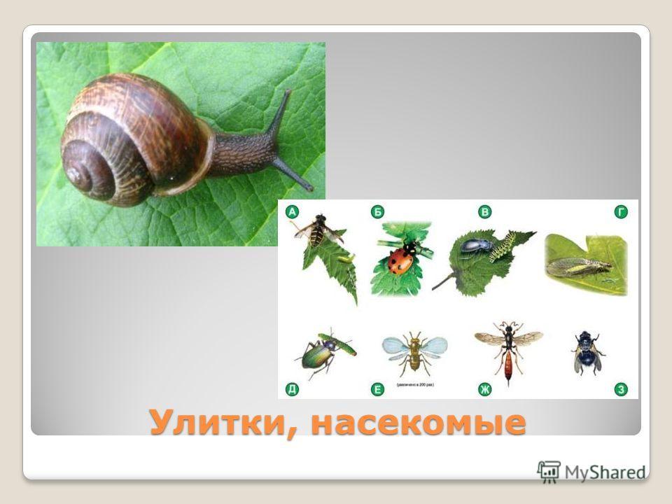 Улитки, насекомые