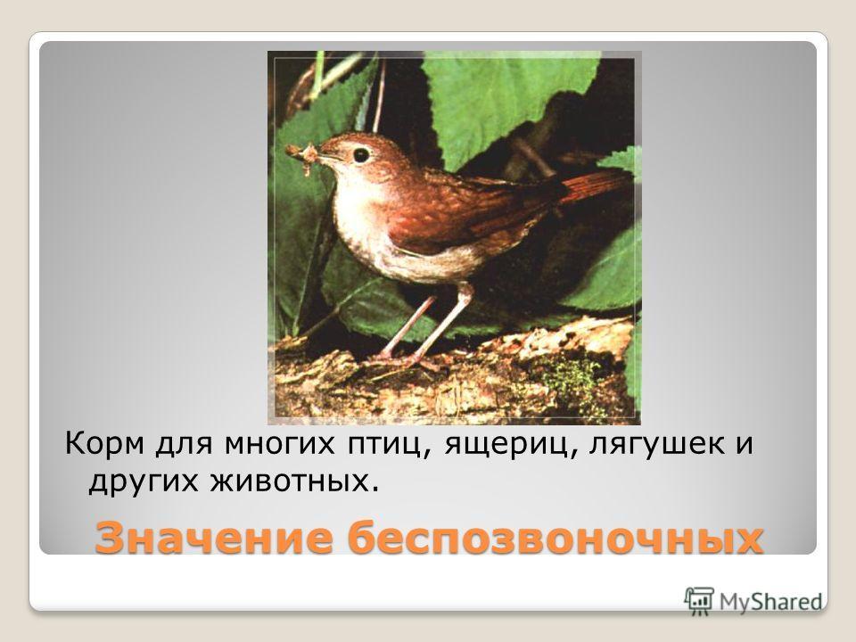 Значение беспозвоночных Корм для многих птиц, ящериц, лягушек и других животных.