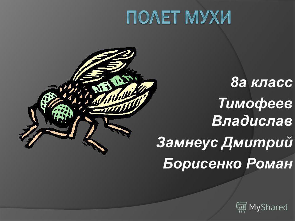 8а класс Тимофеев Владислав Замнеус Дмитрий Борисенко Роман