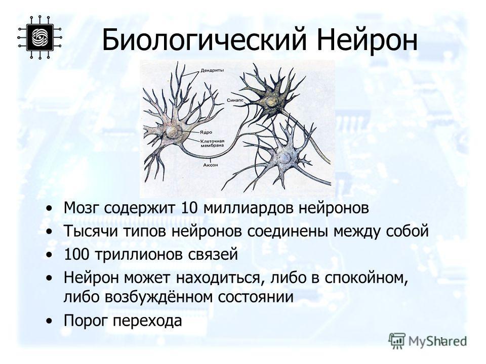 1 Биологический Нейрон Мозг содержит 10 миллиардов нейронов Тысячи типов нейронов соединены между собой 100 триллионов связей Нейрон может находиться, либо в спокойном, либо возбуждённом состоянии Порог перехода