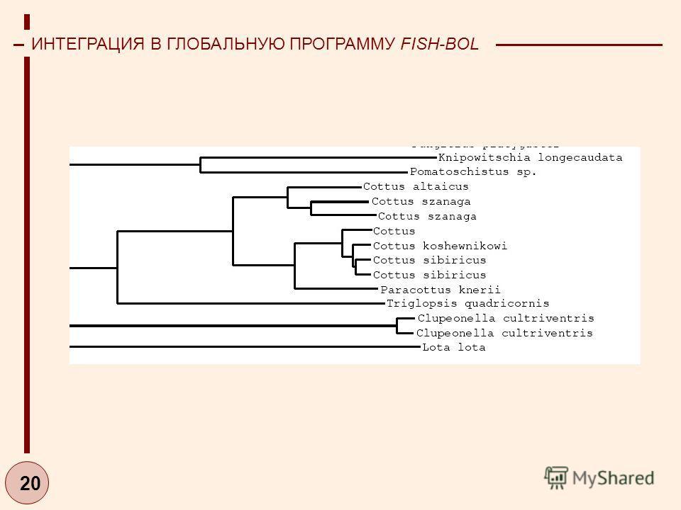 20 ИНТЕГРАЦИЯ В ГЛОБАЛЬНУЮ ПРОГРАММУ FISH-BOL