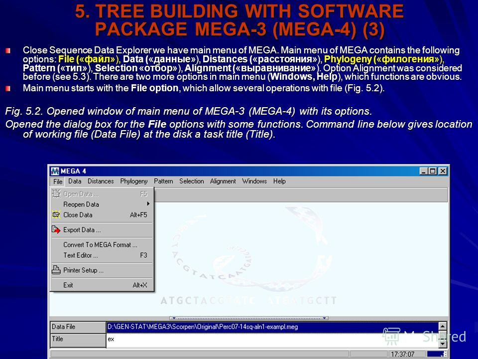 5. TREE BUILDING WITH SOFTWARE PACKAGE MEGA-3 (MEGA-4) (3) Close Sequence Data Explorer we have main menu of MEGA. Main menu of MEGA contains the following options: File («файл»), Data («данные»), Distances («расстояния»), Phylogeny («филогения»), Pa