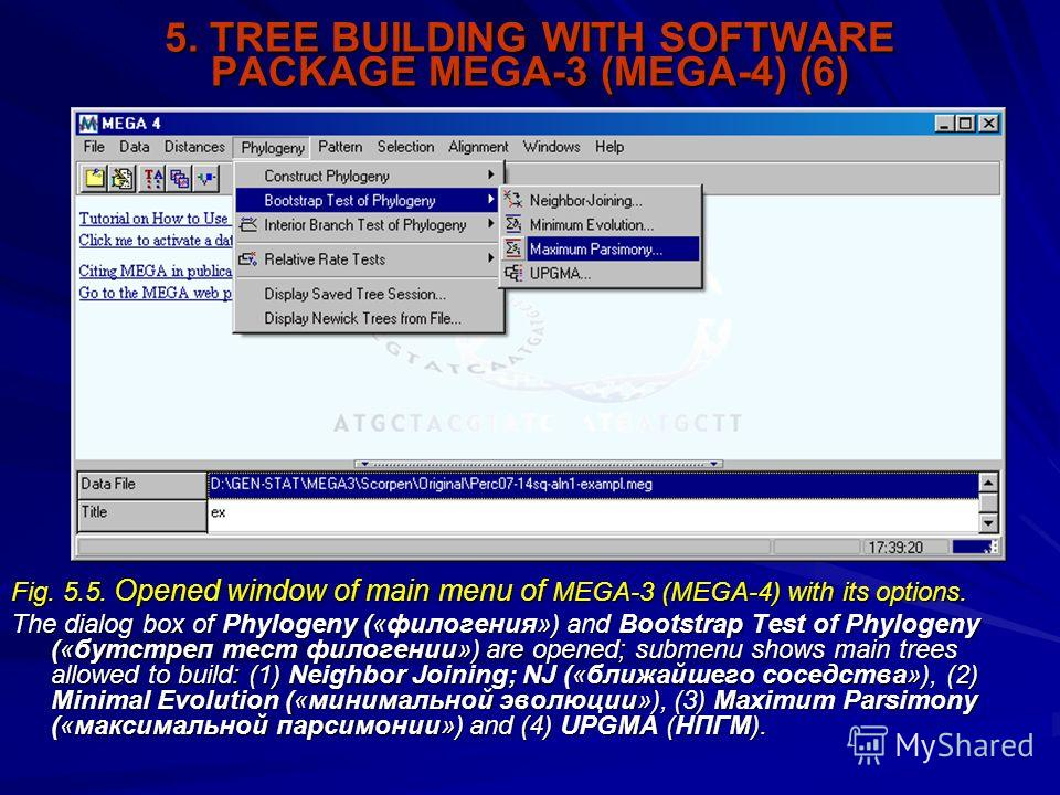 5. TREE BUILDING WITH SOFTWARE PACKAGE MEGA-3 (MEGA-4) (6) Fig. 5.5. Opened window of main menu of MEGA-3 (MEGA-4) with its options. The dialog box of Phylogeny («филогения») and Bootstrap Test of Phylogeny («бутстреп тест филогении») are opened; sub