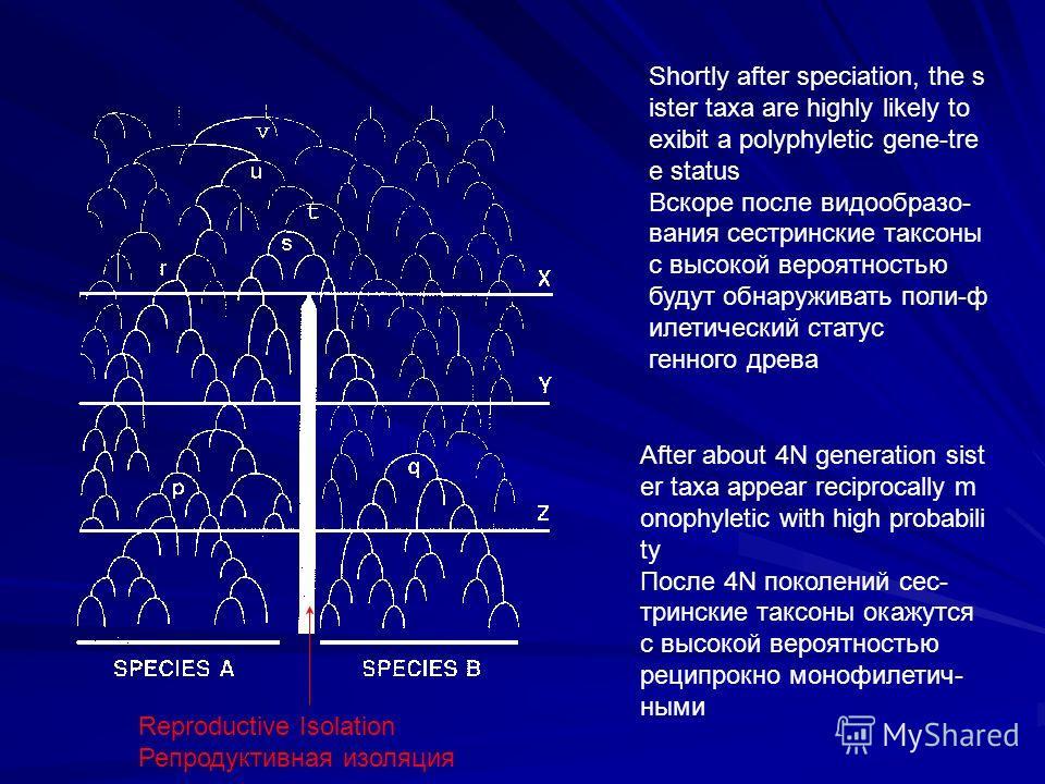 Reproductive Isolation Репродуктивная изоляция Shortly after speciation, the s ister taxa are highly likely to exibit a polyphyletic gene-tre e status Вскоре после видообразо- вания сестринские таксоны с высокой вероятностью будут обнаруживать поли-ф