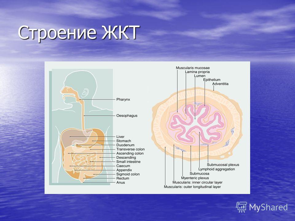 Хронический энтерит полиэтиологическое заболевание тон- кого кишечника, характеризующееся развитием воспалительно- дистрофических процессов, дисрегенераторными изменениями, атрофией слизистой оболочки тонкой кишки различной степени, нарушением всех ф