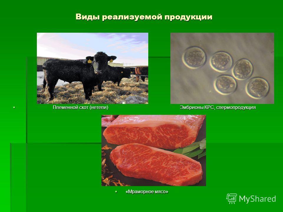 Виды реализуемой продукции Племенной скот (нетели) Эмбрионы КРС, спермопродукция Племенной скот (нетели) Эмбрионы КРС, спермопродукция «Мраморное мясо» «Мраморное мясо»