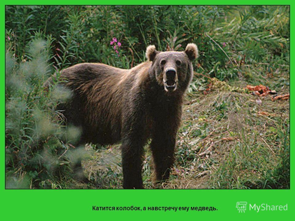 И покатился Колобок по лесу дальше – только волк его и видел…