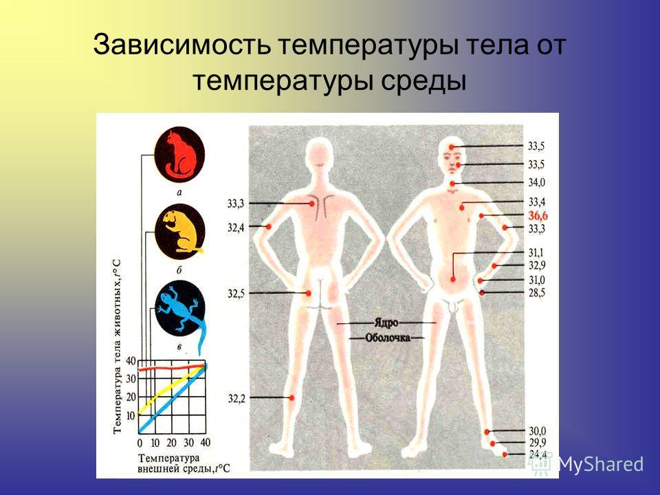 Зависимость температуры тела от температуры среды