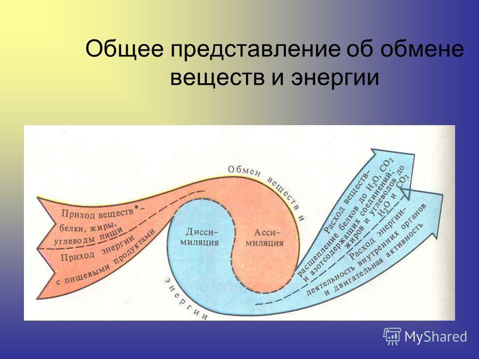 Обмен веществ – это единство двух процессов ассимиляции и диссимиляции. Благодаря обмену веществ происходит выполнение внешней работы, обеспечение постоянства температуры тела, синтетические (пластические процессы.