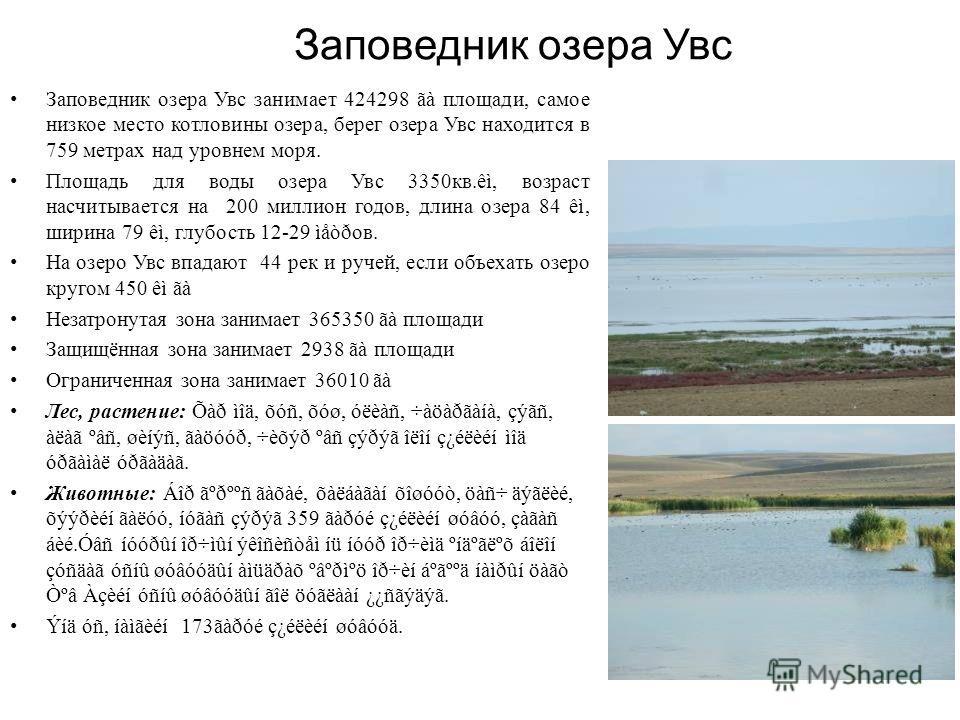Заповедник озера Увс Заповедник озера Увс занимает 424298 ãà площади, самое низкое место котловины озера, берег озера Увс находится в 759 метрах над уровнем моря. Площадь для воды озера Увс 3350кв.êì, возраст насчитывается на 200 миллион годов, длина