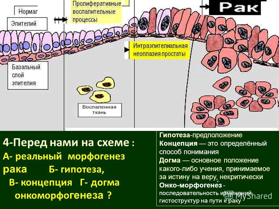 4-Перед нами на схеме : А- реальный морфогенез рака Б- гипотеза, В- концепция Г- догма онкоморфо генеза ? Гипотеза-предположение Концепция это определённый способ понимания Догма основное положение какого-либо учения, принимаемое за истину на веру, н