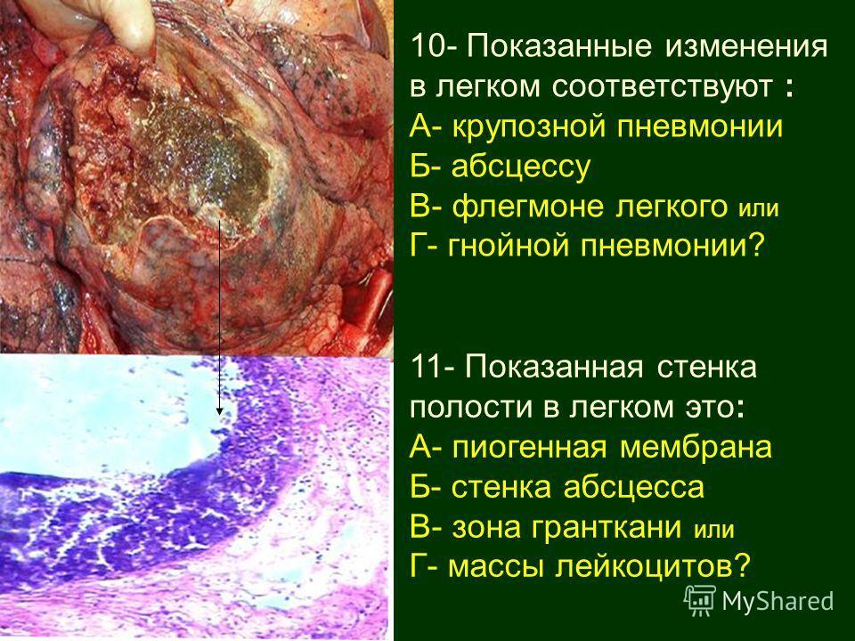 10- Показанные изменения в легком соответствуют : А- крупозной пневмонии Б- абсцессу В- флегмоне легкого или Г- гнойной пневмонии? 11- Показанная стенка полости в легком это: А- пиогенная мембрана Б- стенка абсцесса В- зона гранткани или Г- массы лей